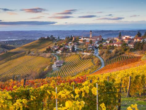 peter-adams-vineyards-treiso-nr-alba-langhe-piedmont-or-piemonte-or-piedmonte-italy
